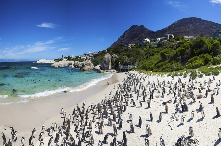 studentlust-cape-town-beaches