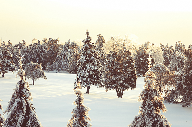 http-www-lifeofpix-com-wp-content-uploads-2014-05-life-of-pix-free-stock-photo-quebec-snow-nature