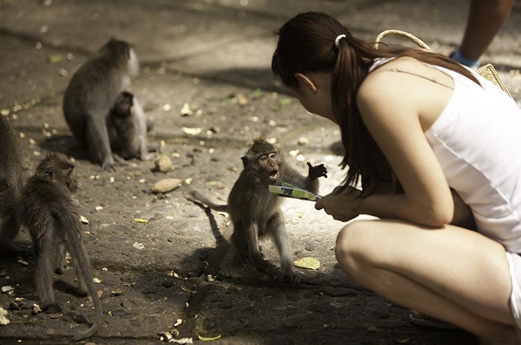 wild-life-thailand